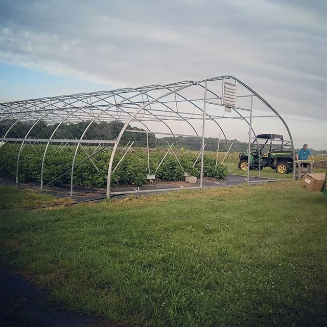 It's been a busy few weeks at the farm!! We got one of the biggest tasks checked off the list! The raspberry tunnel is covered and ready to go! #brickelcreekorganic #raspberries🍇 #farmlife #womenwhofarm #wegotthis💪