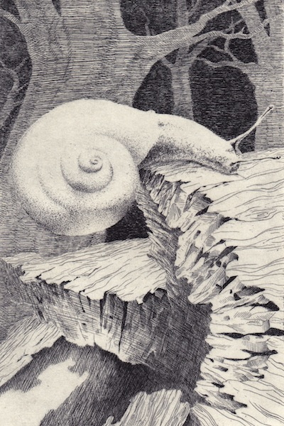Math Snail 9.jpg