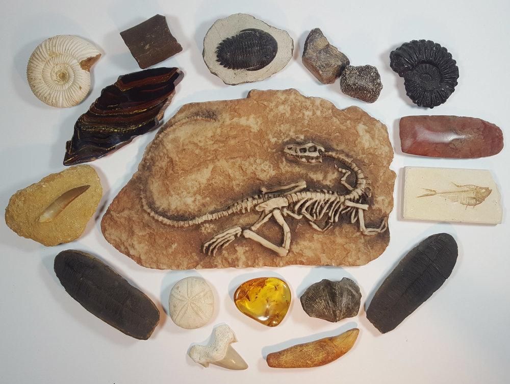 fossils 2 ps.jpg