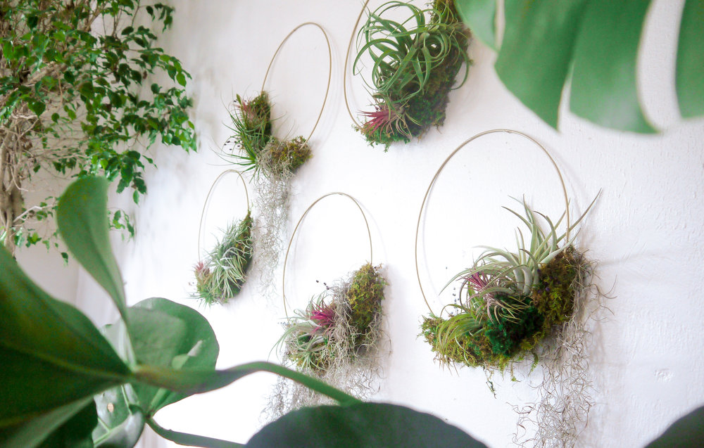 Air Plant Wreath Set-2 (1).jpeg