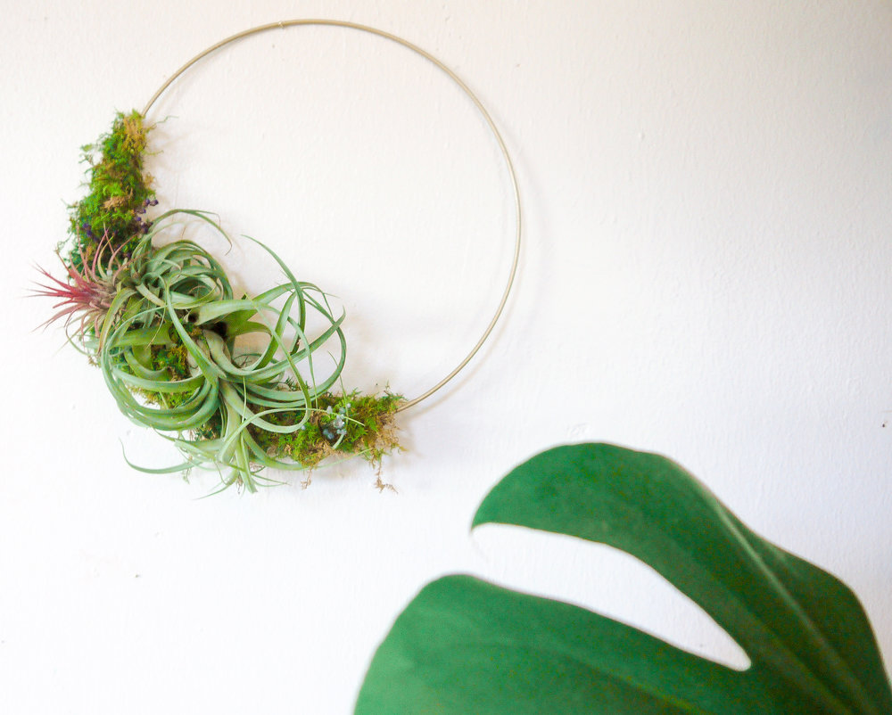 Air Plant Wreath-2.jpeg