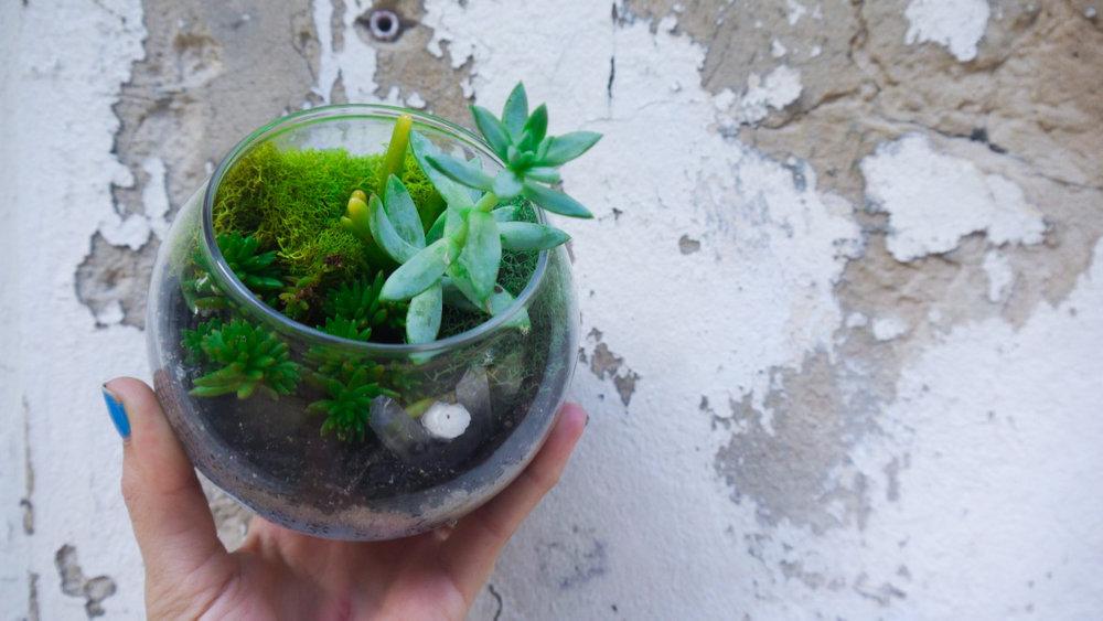 Succulent + Crystal Terrarium FQ-4.jpg