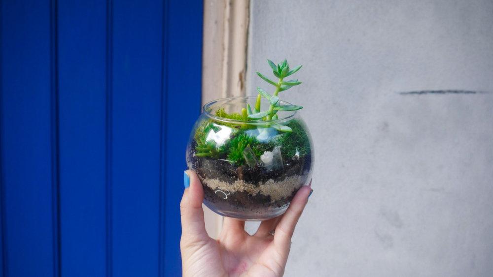 Succulent + Crystal Terrarium FQ-5.jpg