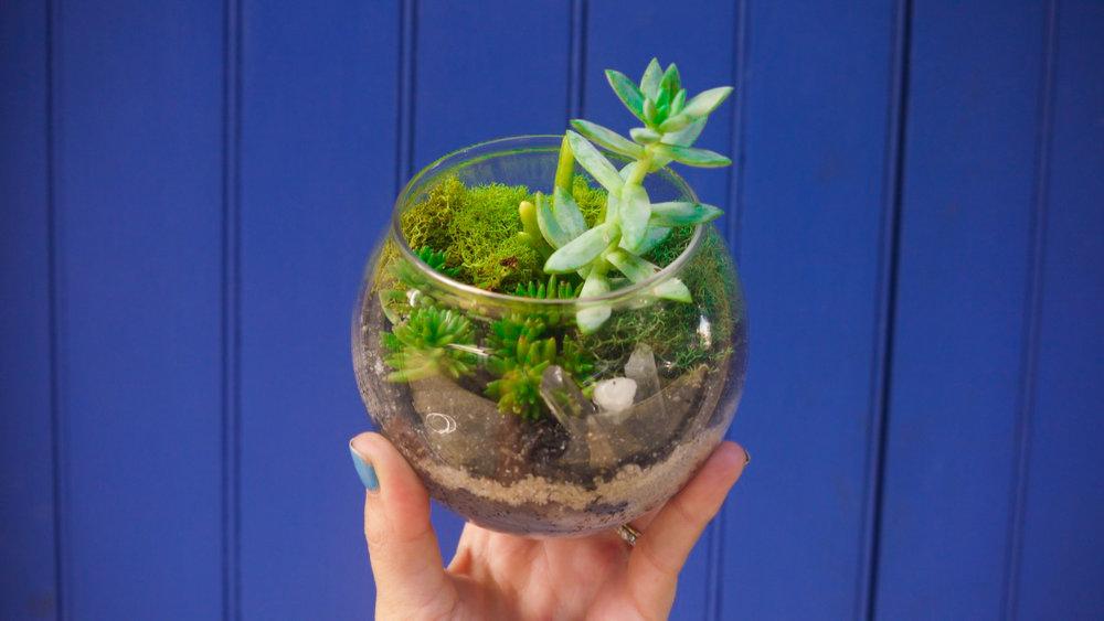 Succulent + Crystal Terrarium FQ-6.jpg