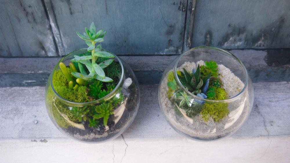 Succulent + Crystal Terrarium FQ-14.jpg