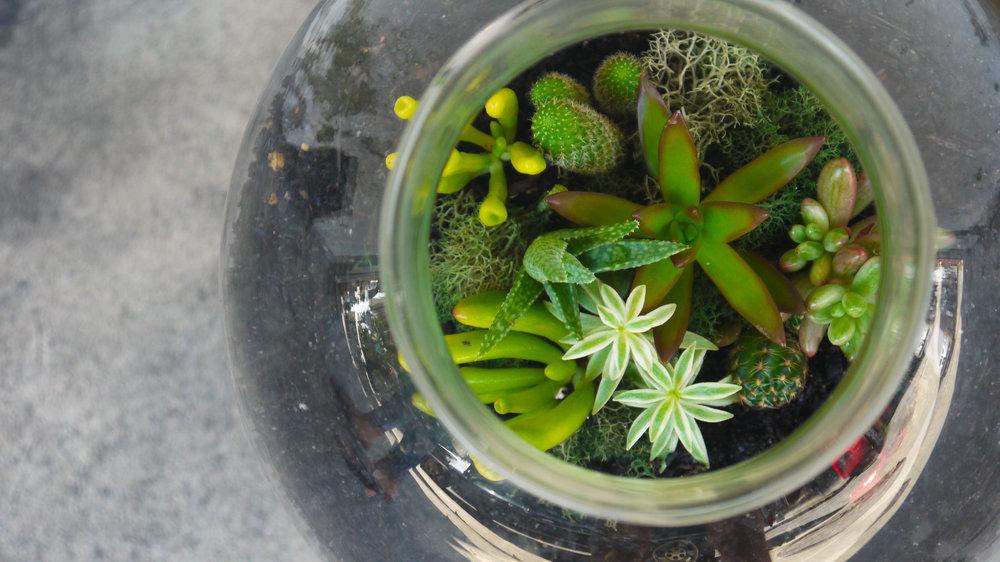 Succulent + Crystal Terrarium FQ-18.jpg