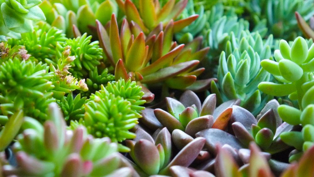Succulent + Crystal Terrarium FQ-22.jpg