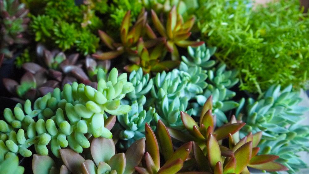 Succulent + Crystal Terrarium FQ-25.jpg