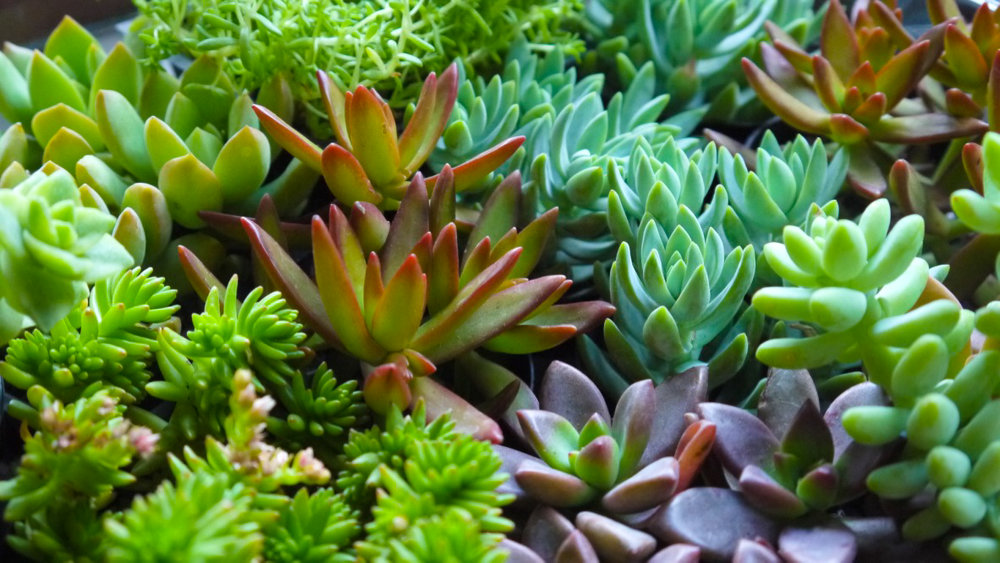 Succulent + Crystal Terrarium FQ-24.jpg