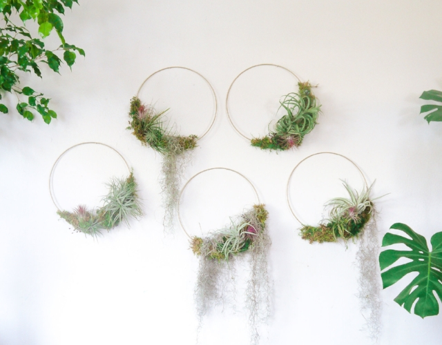 Botanical Art + Plant Curation Sale - Immerse yourself in our living decor and shop our exclusive plant curation and botanical art sale.Tillandsia rings, Luna headpieces, indoor trees, exotic plants, modern planters & interesting vessels will be available for purchase.Shipping, Delivery, Installation & Consultation available.