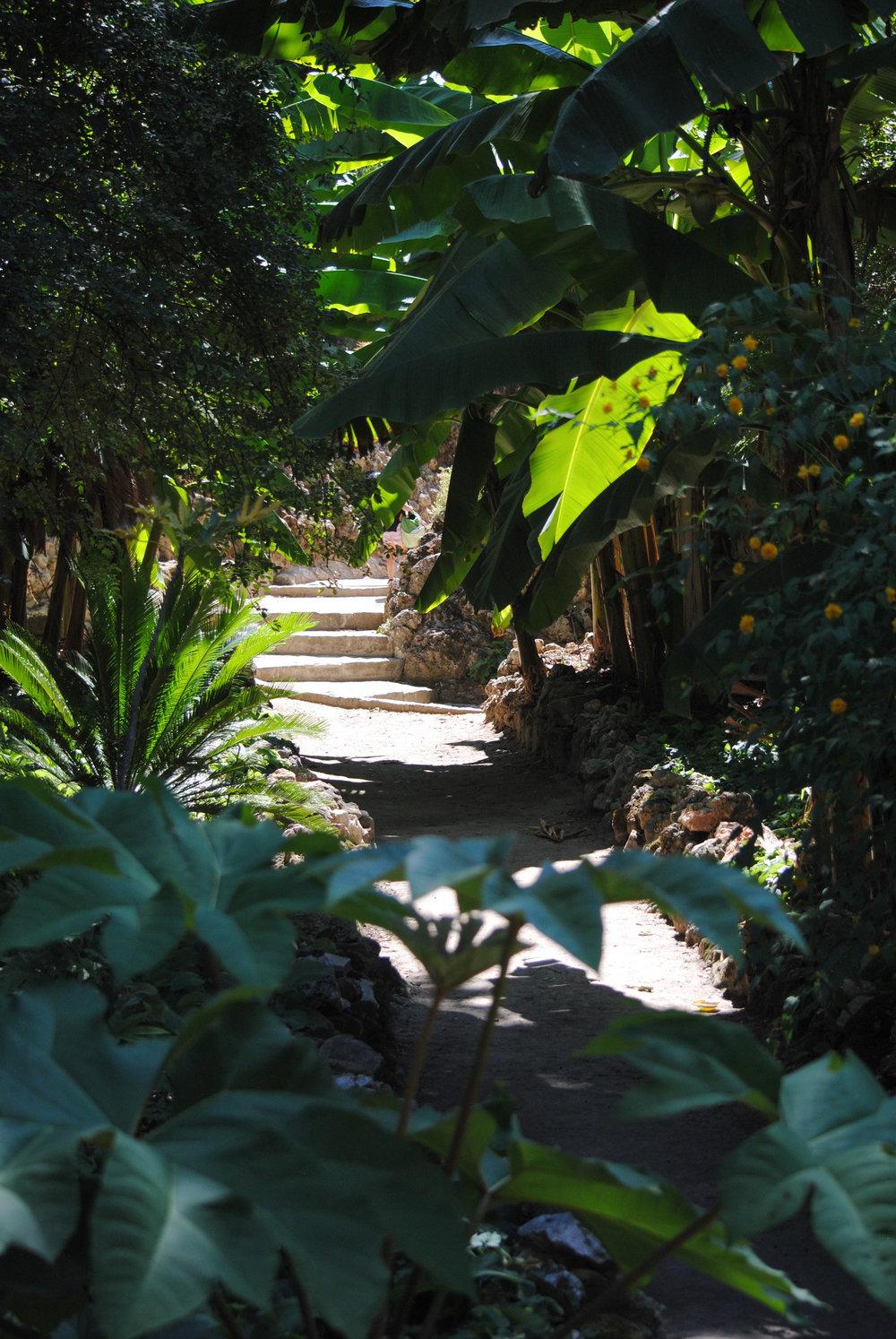Le Jardin des Plantes. Photo by AKYOGA.