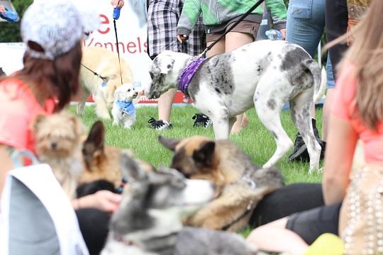 Regina Humane Society dog jog sponsor since 2010