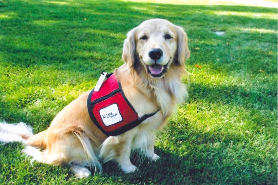 St. John Ambulance Therapy Dog Sponsor