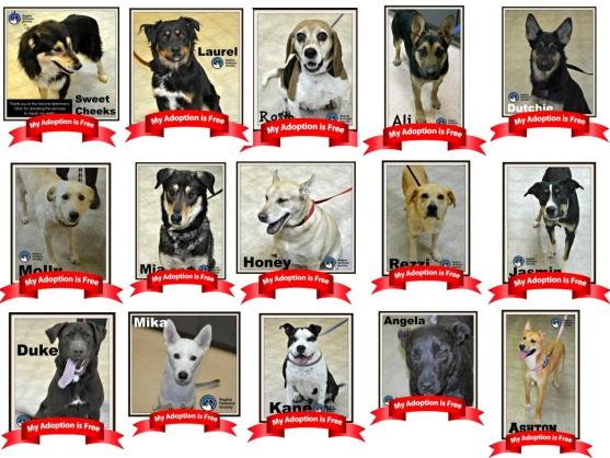 Regina Humane Society monthly sponsored dog adoption
