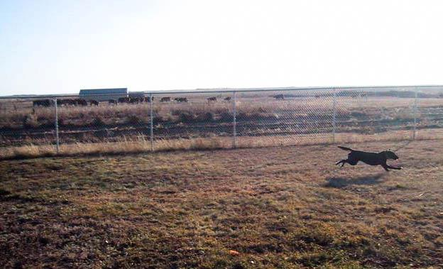 We added a large security fence.