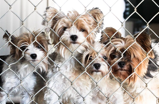 They love the chain link doors so they can watch the world go by.