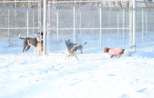 During play time dogs from different families get to stretch their legs in separate and safe play spaces.