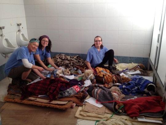 World Vets spay/neuter volunteer Cuzco Peru