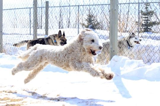 Laika, Luke and Hannah get their run on