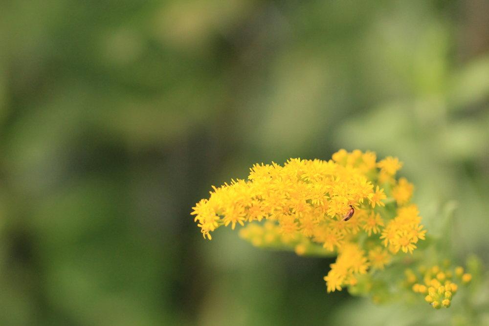 weeds (5).JPG