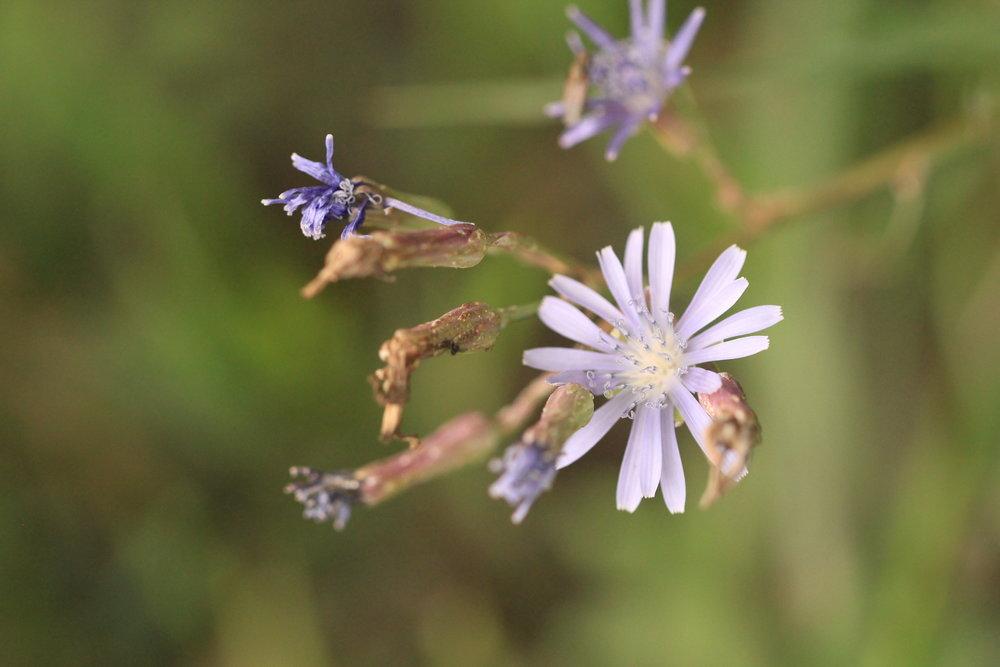 weeds (1).JPG