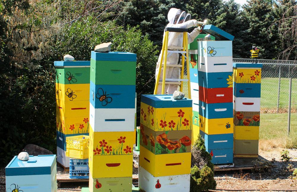beekeeping2-1.jpg