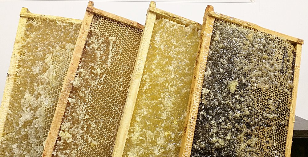 Bees make different honey from different flower sources - and they colour sort it!
