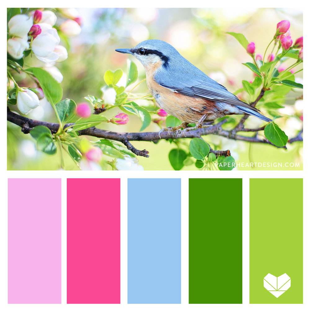Spring inspired color palette. Bright color scheme. Pink, Green, + Blue. Feminine and Fun.