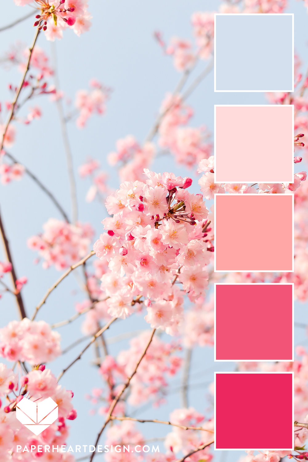 Pink and lit blue Cherry Blossoms PHOTO.jpg