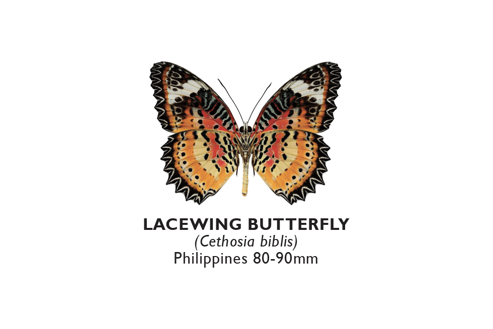 Lacewing Butterfly.png