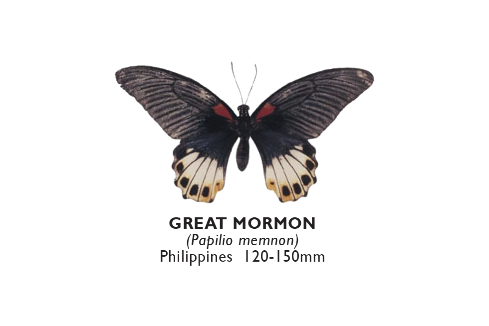 Great Mormon.png