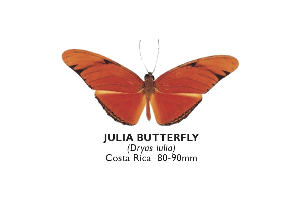 Julia Butterfly.png