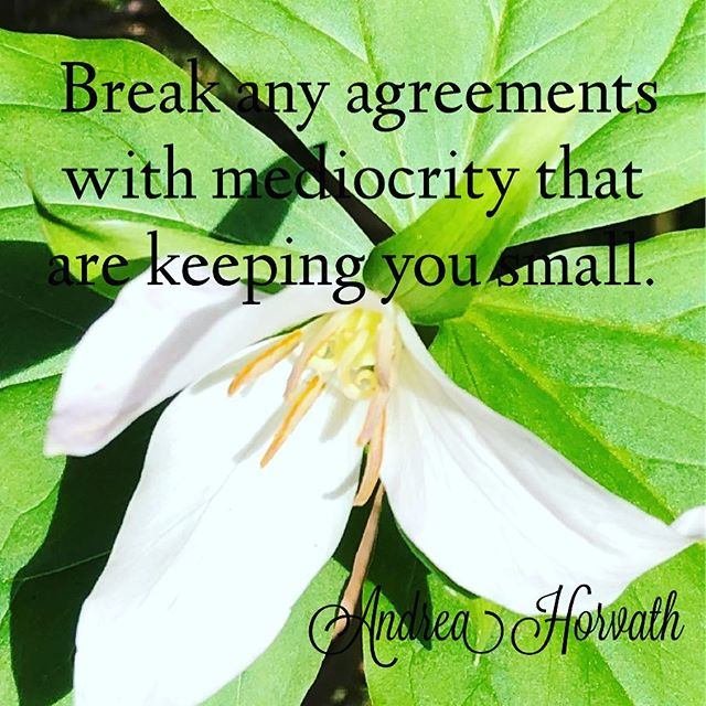 Break any agreements you have made with mediocrity that are keeping you small. Strive for excellence and reach for a place that part of you doesn't even think is possible! But remember, mediocrity loves to attack excellence because you are making them uncomfortable. Keep going and be the example of what is possible! . . #success #goals #personaldevelopment #excellence #empowerment #achieve #harmony #lawofattraction #freedom #wealth
