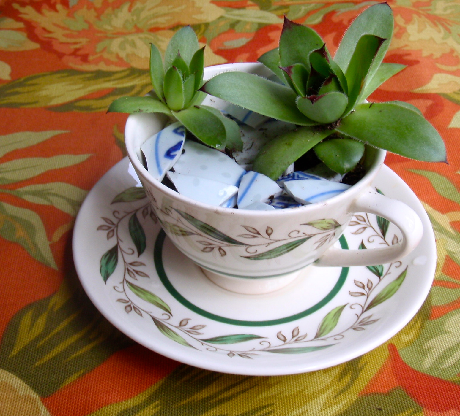 teacup plants diy craft succulents garden