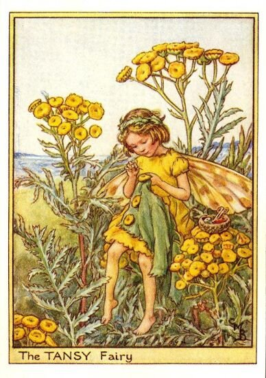 the tansy fairy by cecily mary barker