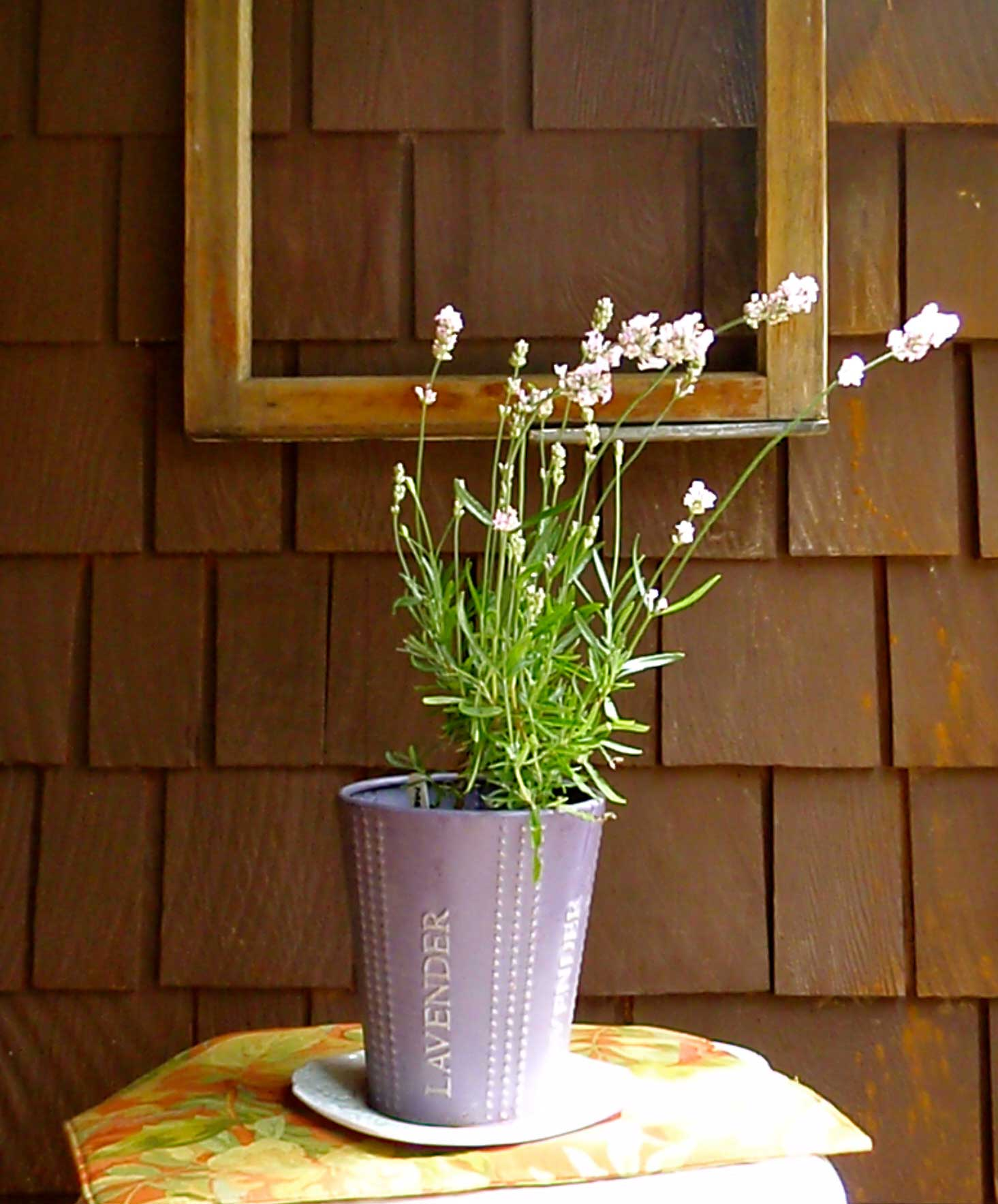 lavender pink white melissa unusual