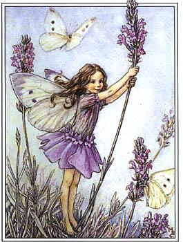 lavender fairy cecily mary barker