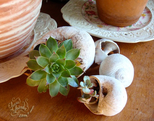 succulent seashells planting in shells favor place card idea