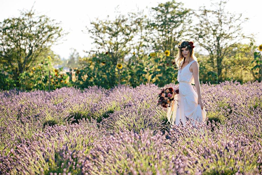 Lavender-377