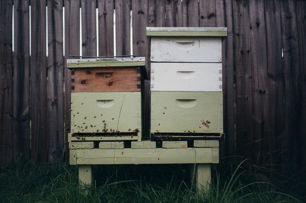 how about we keep the bees around