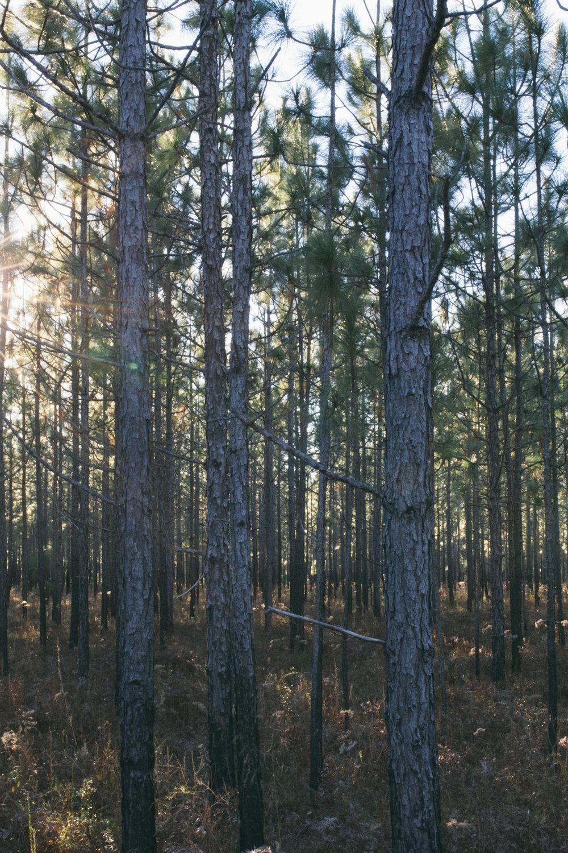 so many trees