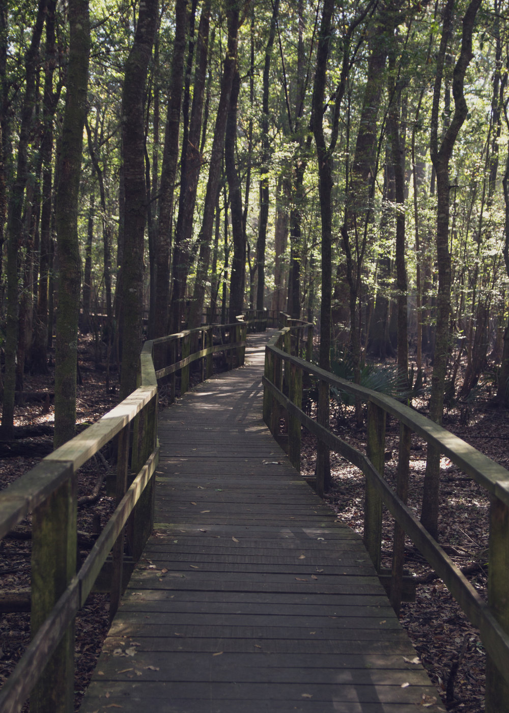 29 October 2013     Francis Beidler Forest    So today I was out wandering around the back roads of South Carolina and stumbled across this park/forest. The owners built a 5k long boardwalk throughout the swamp. This forest hosts the 2nd oldest cypress tree in the world. If you ever find yourself in South Carolina this place is a gem.