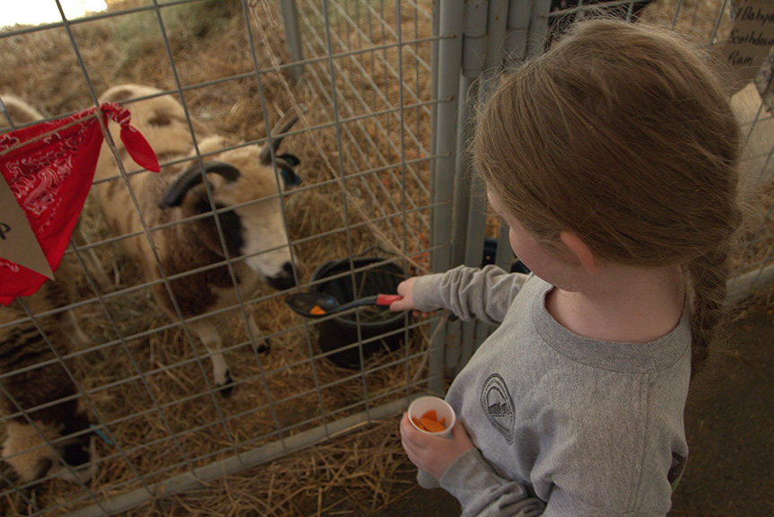 Arkansas State Fair Hunter feeds a goat by Kat Robinson.jpg