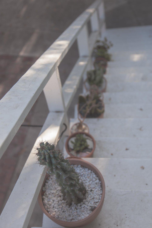 Seth Barnard Cacti On Stairs
