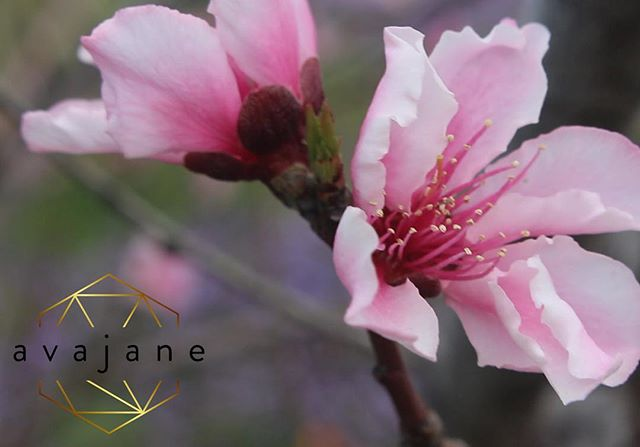 Happy Earthday. Everyday is a celebration!  #love your mama #Earthday #blossom  @a_v_a_j_a_n_e