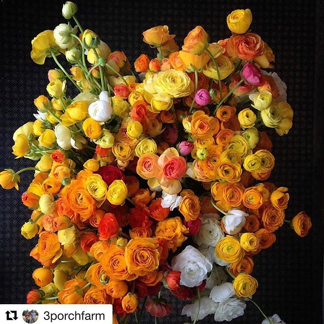 Photo from @3porchfarm  They grow amazing flowers!  I was lucky enough to interview them last June for @a_v_a_j_a_n_e  #flowers #garden #landscape  So in love with this beauty. http://www.avajane.com/interview-with-3-porch-farms-and-moonflower-design/