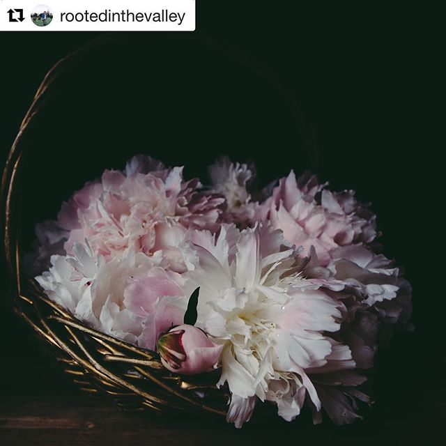 "happy to introduce Audra Mulkern and share with you her latest work ""The Female Farmer Project""  I had the pleasure of interviewing her for avajane.com.  Link below #Repost @rootedinthevalley with @get_repost ・・・ I am telling you, my peonies are spectacular this year! #mychiaroscurogarden.  http://www.avajane.com/interview-with-audra-mulkern-and-the-female-farmer-project/"