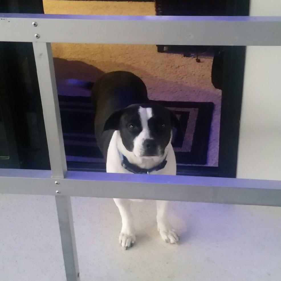 Our buddy PeeDee on Dock 3!