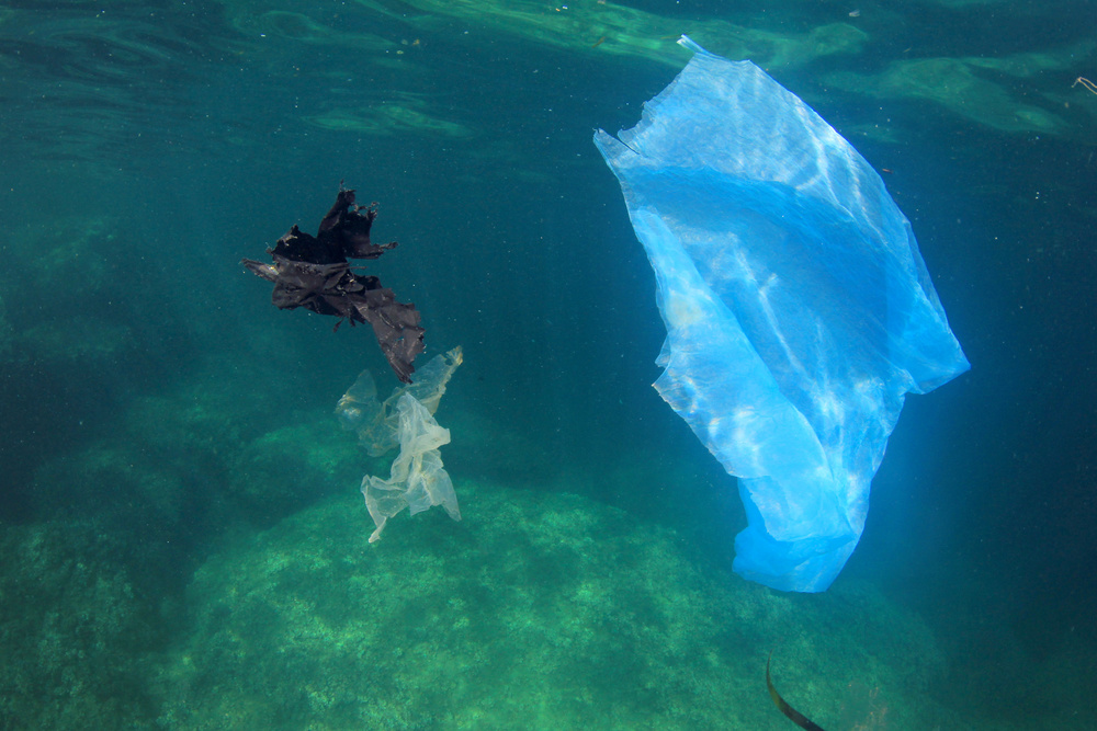 It's easy for turtles to confuse plastic bags and other marine debris for jelly fish.