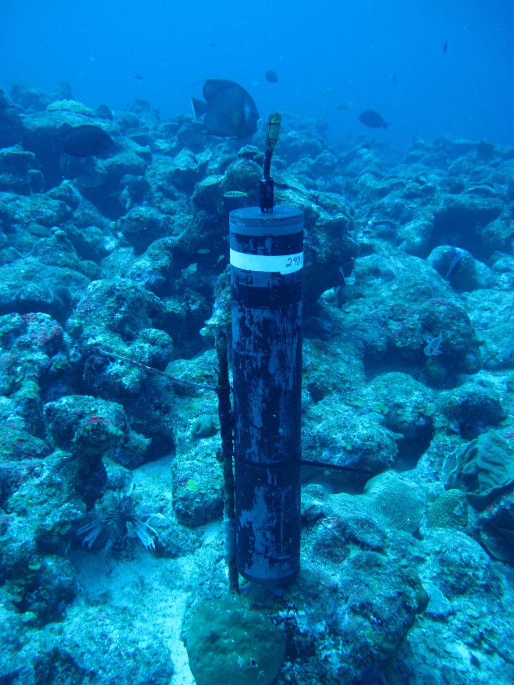 Seen here, a hydrophone is attached to the ocean floor.